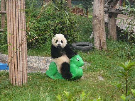 Оргазм у панд фото 404-574