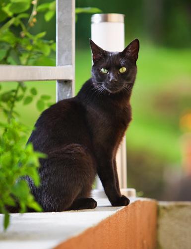 Вот сидит черный кот