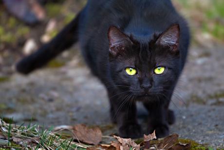 Пятница, 13: все о черных кошках - Леди Mail.ru