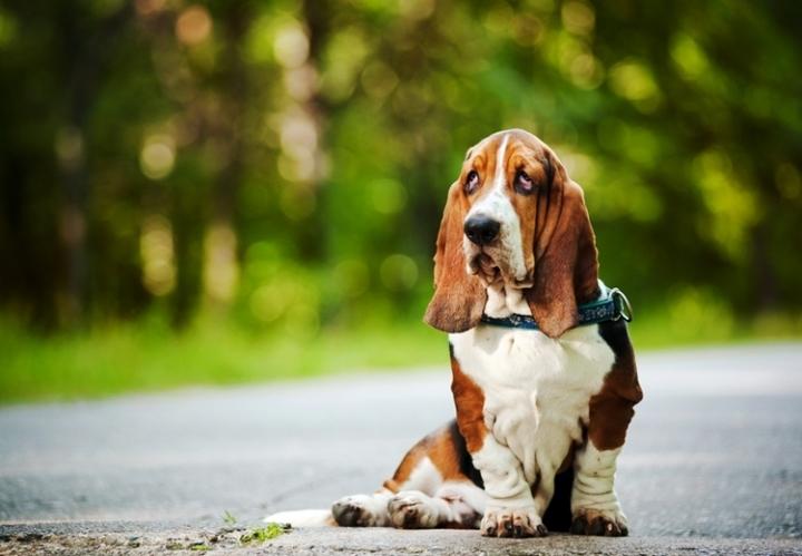 популярные домашние собаки