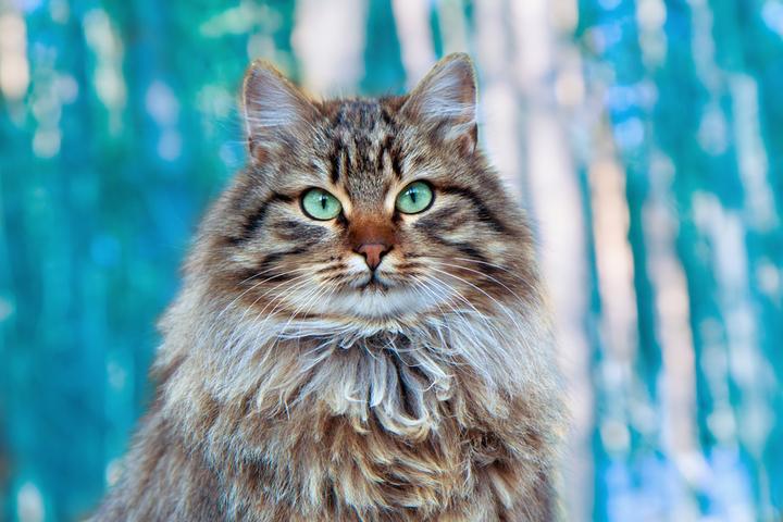 кошек и их породы