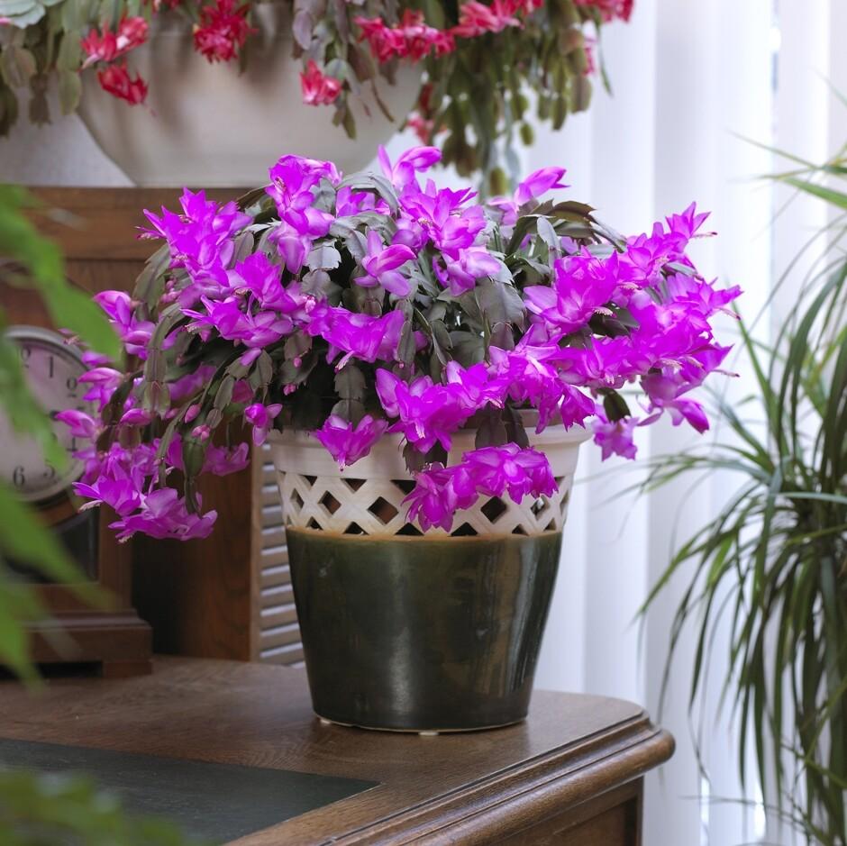 Цветы  комнатные редкие