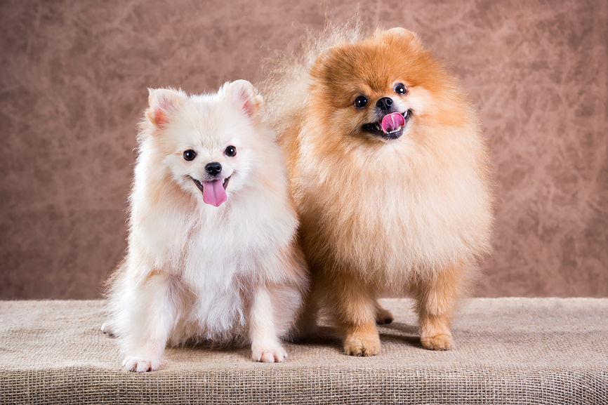 мини собачки  и породы