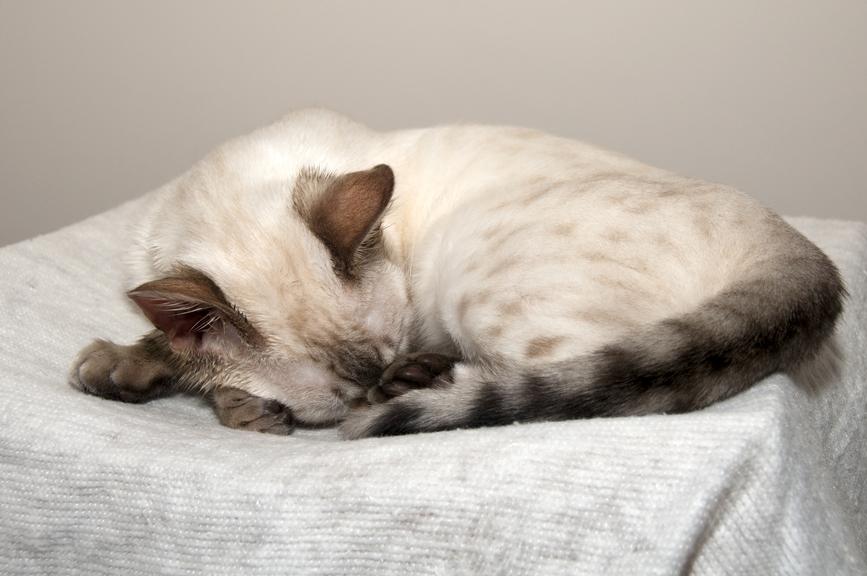 кошка лижет стены:
