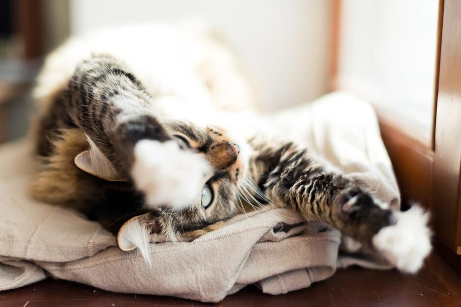 К чему кот спит на столе приметы