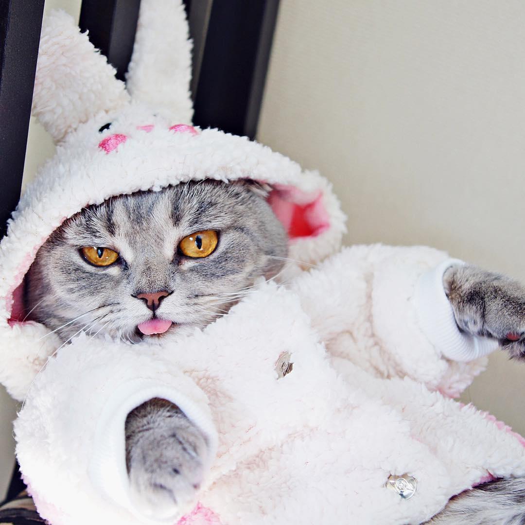 соединить, самые прикольные коты в мире фото расходные материалы
