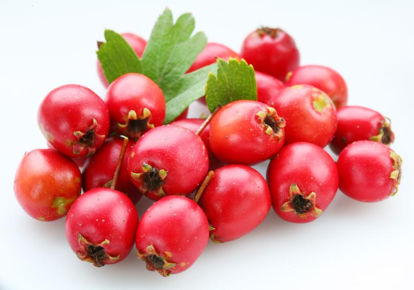использование плодов боярышника