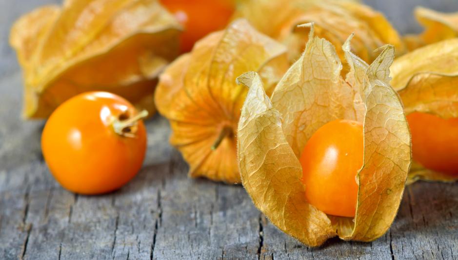 Ягода оранжевая в цветке