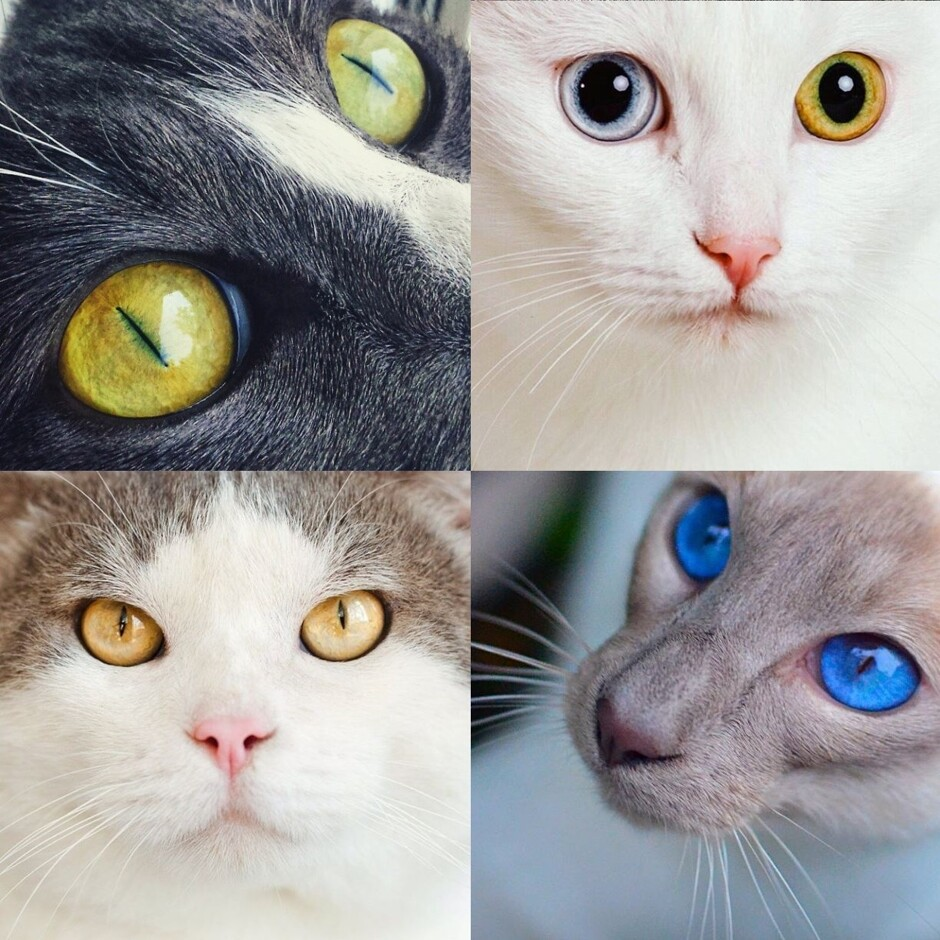 Interesting Facts about Cats Anatomy - The Latest Woofs from ...