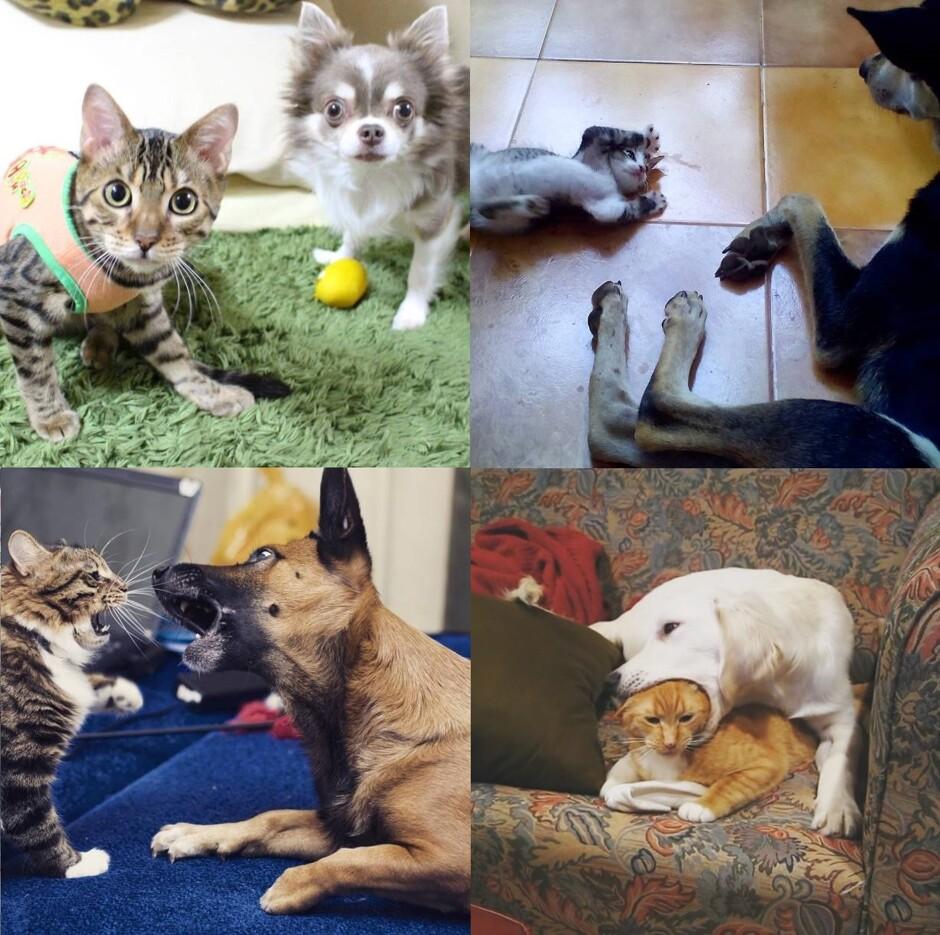 Кот и пес ru