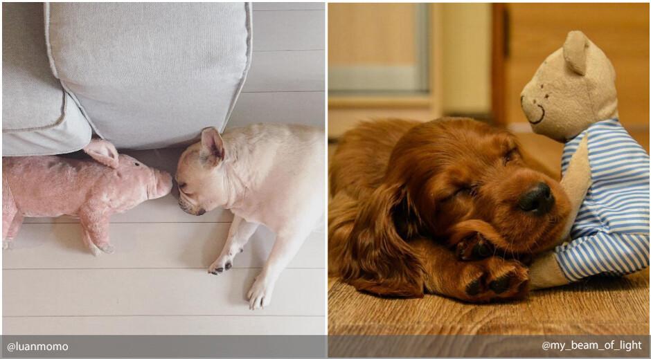 Видеть во сне огромную собаку